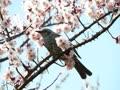 花と鳥のスライドショー